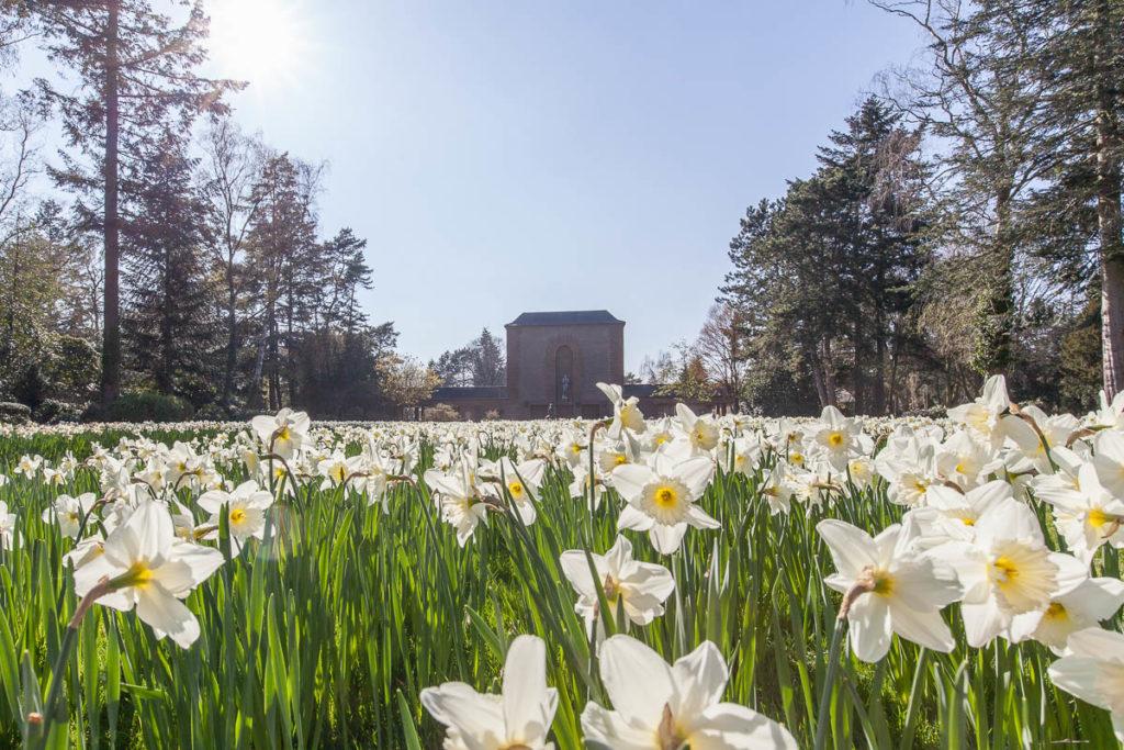 Das Narizssenfeld auf dem Hauptfriedhof lockt jedes Frühjahr viele Besucher und Hobbyfotografen an.
